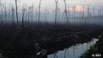 A peat swamp in Indonesia