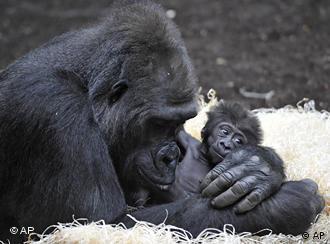 Впредь опыты на высших приматах в Европе будут запрещены