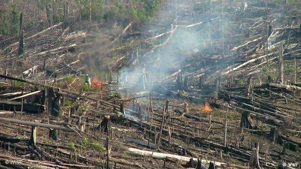 Brandrodung des Torfwaldes (Quelle: WWF)