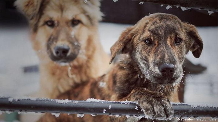 Spenden-Marathon für Tiere