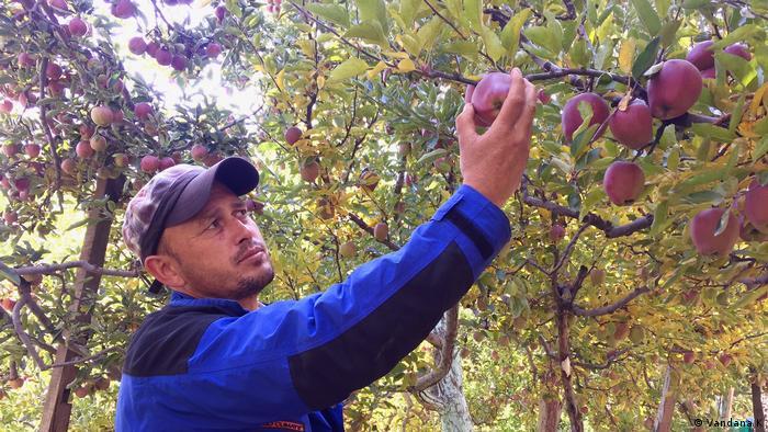 Apple farm in Kalpa India
