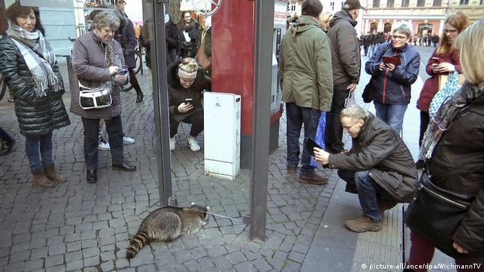 People surrounding drunken raccoon