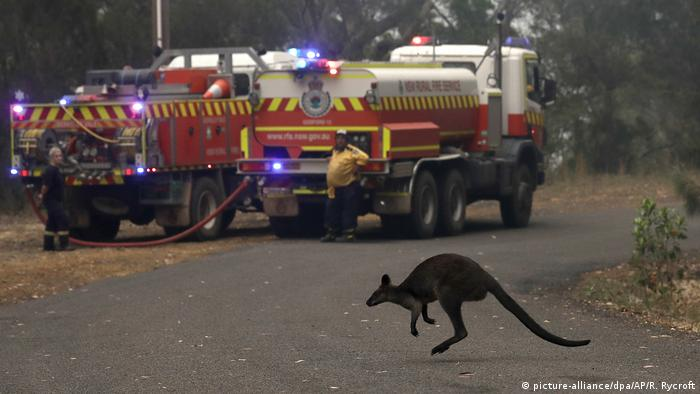 A charred kangaroo crosses a road in front of firefighters