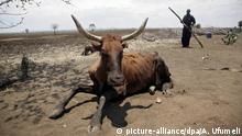Zimbabwe Dürre Trockenheit