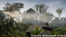 The Amazon Rainforest in Peru