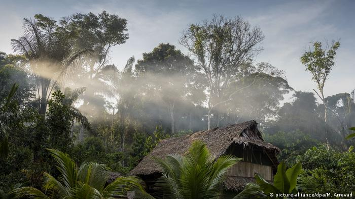 The Amazon rainforest, known as the 'lungs' of the world, is being ravaged by disaster.