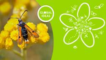 Pollinators under threat
