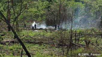 Desmatadores em ação: é comum, durante as visitas de campo, se deparar com restos de árvores derrubadas e madeira queimada no terreno