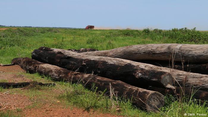 Brasilien Abholzung in der brasilianischen Savanne (DW/N. Pontes)