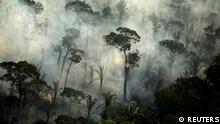 Pictures of the Year: Fires in the Amazon: a barrier to climate change up in smoke (REUTERS)