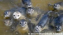BdT Seehundstation zieht Bilanz