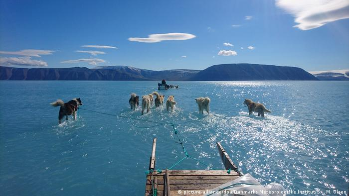 Huskies pulling sleds through ankle-deep meltwaters on top of an ice sheet around 1.2 meters deep in Greenland