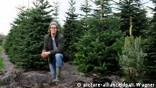 Kersten Scholz von der Baumschule Scholz im Ammerland bei Bad Zwischenahn (Niedersachsen) stellt am 04.12.2015 die neuen Leih-Weihnachtsbäume mit Blumentopf vor. Erstmals setzt die Baumschule auf Nachhaltigkeit beim Weihnachtsbaumgeschäft. Sie verleiht die Tannen und liefert sie an die Kunden im Topf aus. Nach dem Fest werden die Bäume abgeholt und wieder in der Tannenschonung eingepflanzt. Foto: Ingo Wagner/dpa (zu lni Weihnachtsbäume mieten statt wegwerfen liegt im Trend vom 15.12.2015)   Verwendung weltweit