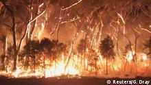 A fire blazes across bush in Newnes Plateau, New South Walles, Australia, December 7, 2019 in this picture grab obtained from a social media video on December 8, 2019. Gena Dray via REUTERS THIS IMAGE HAS BEEN SUPPLIED BY A THIRD PARTY. MANDATORY CREDIT. NO RESALES. NO ARCHIVES.