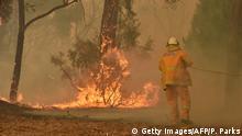 Buschbrände in Australien | Feuerwehrleute
