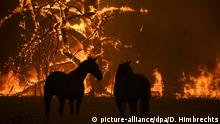 Buschbrände in Australien Pferde