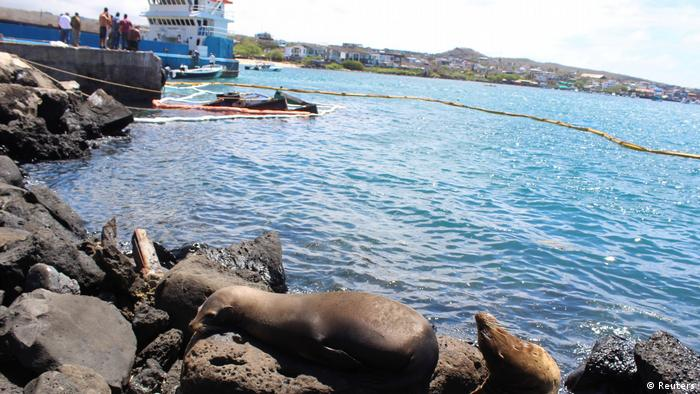 Sea lions near a contained oil spill in the Galapagos Islands