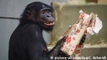 Affen der Wilhelma bekommen Geschenke