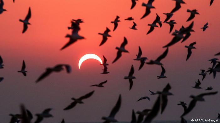 Kuwait Sonnenfinsternis (AFP/Y. Al-Zayyat)