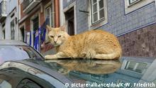 Katze sonnt sich auf einem Auto, Bairro Alto, Lissabon, Portugal, Europa | Verwendung weltweit, Keine Weitergabe an Wiederverkäufer.