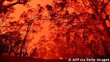Australien l Buschbrände in Nowra, New South Wales