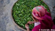 BDT Teeblätter werden zum Trocknen ausgelegt in einem Bergdorf in Nannuoshan / China