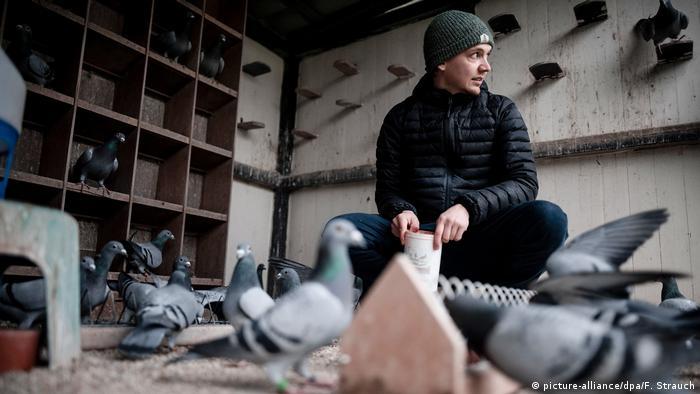 Марсель Краузе является владельцем 120 почтовых голубей. Самому старому - 16 лет