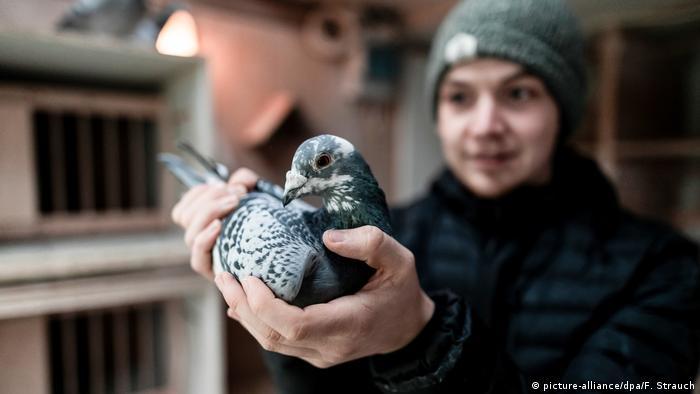 Житель города Камен в Рурской области Марсель Краузе (Marcel Krause) в своей голубятне