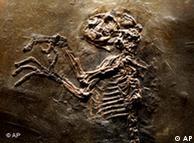 پریماتها اجداد انسانهای نخستین به شمار میروند