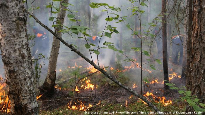 A forest fire in Russia
