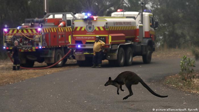Buschfeuer in Australien Buschbrände Katastrophe (picture-alliance/dpa/R. Rycroft)