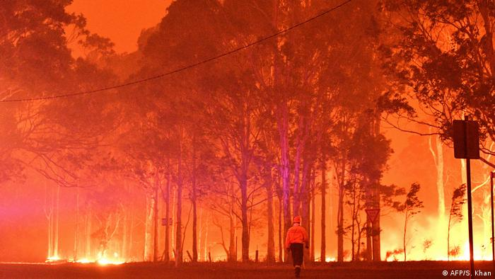 A forest lit up orange from the flames that engulf it