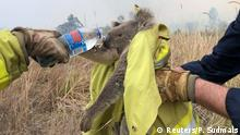 November 21, 2019*** Fire and Rescue NSW team give water to a koala as they rescue it from fire in Jacky Bulbin Flat, New South Wales, Australia November 21, 2019 in this picture obtained from social media. Picture taken November 21, 2019. PAUL SUDMALS/via REUTERS THIS IMAGE HAS BEEN SUPPLIED BY A THIRD PARTY. MANDATORY CREDIT. NO RESALES. NO ARCHIVES.