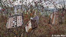 Titel: Eine Guerilla Aktion in Rasadnik, Skopje, Nord-Mazedonien Die Bäume in Rasadnik gebären sogar Häuser Copyright: Radio MOF Bild samt Copyright und Nutzungsfreigabe geliefert durch DW/Elizabeta Milosevska