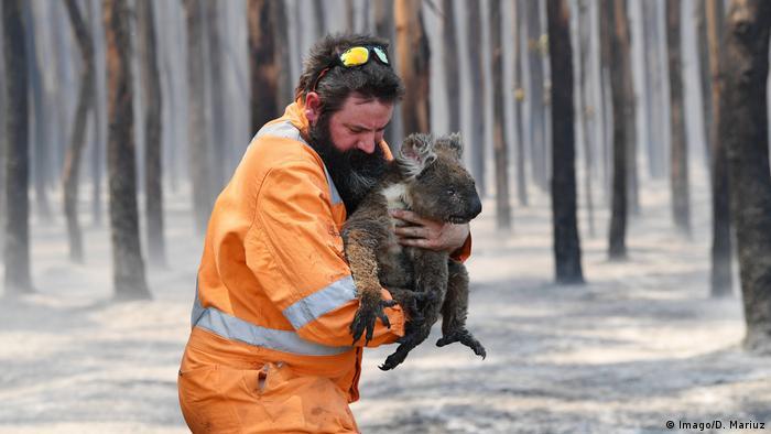 Коала, спасенный от пожаров на острове Кенгуру