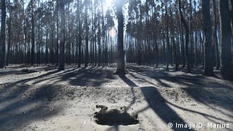 Waldbrände / Buschbrände in Australien