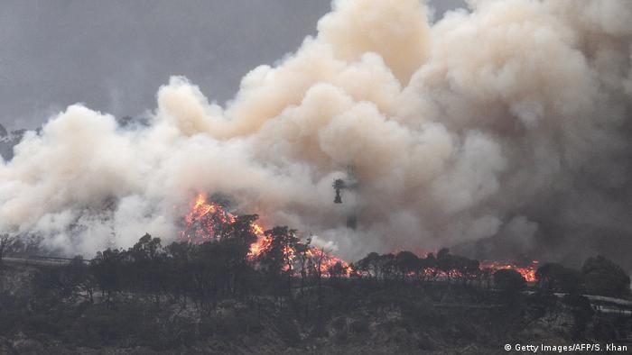 Požar u šumi i raslinju