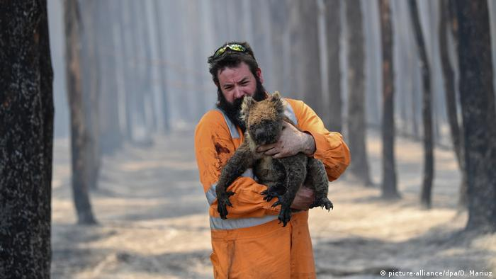 Koala being rescued by a firefighter