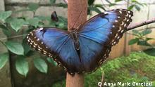 Global Ideas Costa Rica Biodiversität (Anna Marie Goretzki )