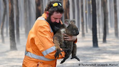 BdTD Australien Waldbrände - Rettung eines Koalas (Reuters/AAP Image/D. Mariuz)