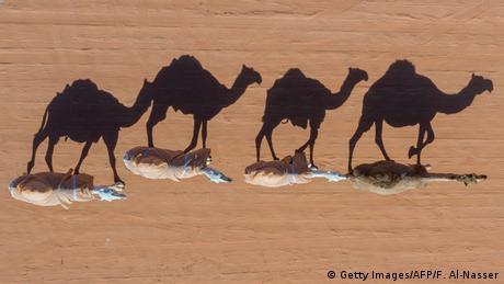 BdTD Saudi-Arabien Kamelfestival in Rumah (Getty Images/AFP/F. Al-Nasser)