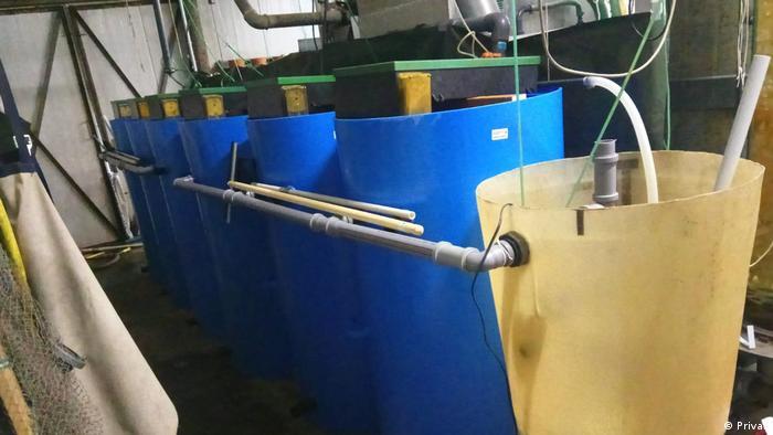 Deutschland RAS Projekt   Harish   Leibniz-Institute für Gewässerökologie (Privat)