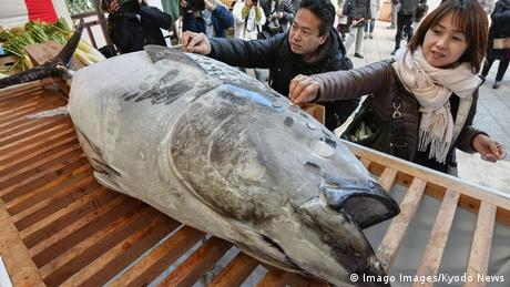 BdTD Japan Thunfisch im Nishinomiya-Schrein (Imago Images/Kyodo News)