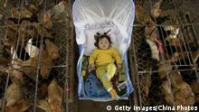 ARCHIV 2006 *** WUHAN, CHINA - APRIL 19: (CHINA OUT) A vendor's baby lies in a bassinet beside chicken cages at a poultry wholesale market April 19, 2006 in Wuhan, Hubei Province, China. A 21-year-old man, a migrant worker in Wuhan, has been infected with H5N1 bird flu and is now in a critical condition, the Ministry of Health said on April 18. The case brings the total number of human cases of bird flu in China to 17, resulting in 11 deaths, according to state media. (Photo by China Photos/Getty Images)