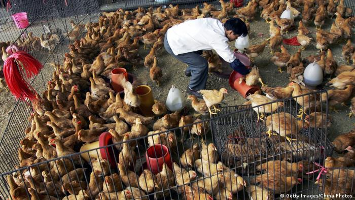 A vendor picks chickens for customers at a poultry wholesale market in Wuhan