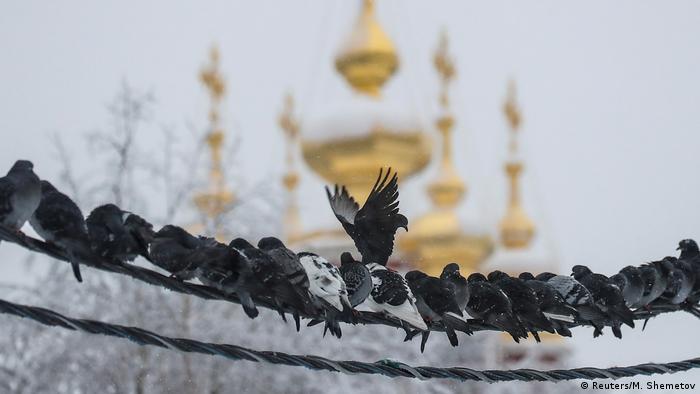 BdTD Russland Moskau   Tauben im Winter & Nowodewitschi-Kloster (Reuters/M. Shemetov)