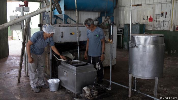 Las semillas de andiroba y murumuru se procesan en la planta de la comunidad de Roque, la más grande de Resex.