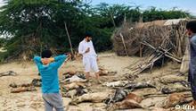 Iran Überschwemmungen im Südosten | tote Tiere