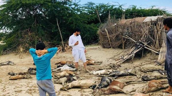 Iran Überschwemmungen im Südosten | tote Tiere (Irna)