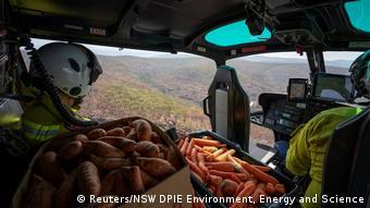 BG Australien Buschbrände Tierschutz
